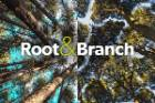 Root & Branch (thumb)