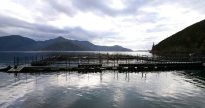 The aquaculture strategy says a 10-hectare salmon farm can be worth $140 million in annual revenue.