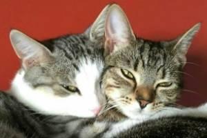 Chilli and Coco are so close, they nearly achieve fusion.