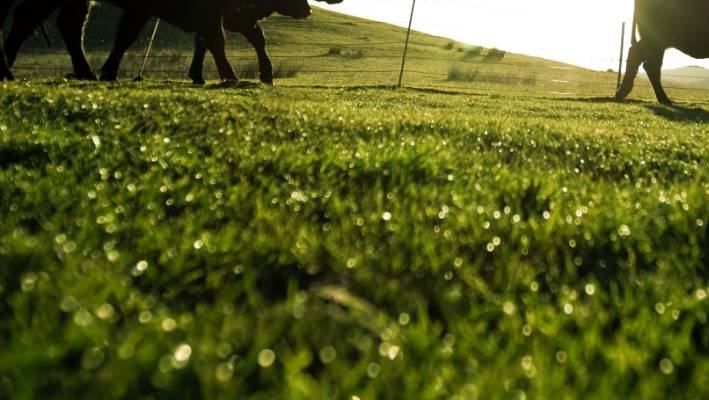 Just over 12 hectares of indigenous vegetation was converted into pasture for intensive dairy grazing (file photo).