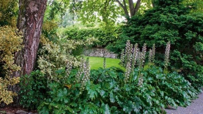 A glimpse of the garden from the driveway.