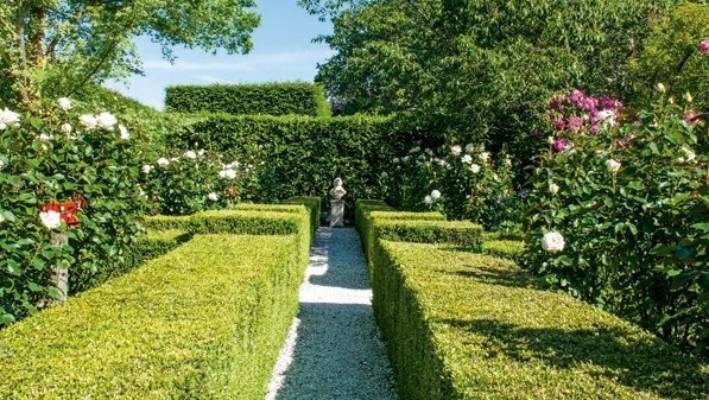 Buxus hedges contain more than 25 'White Lace' roses, with big blooms and tall stems that make them the perfect picking flower.
