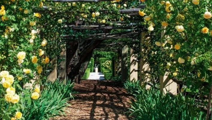 An archway of the climbing rose 'Graham Thomas' with blue irises beneath leads past a pepper tree to the Astro Garden.