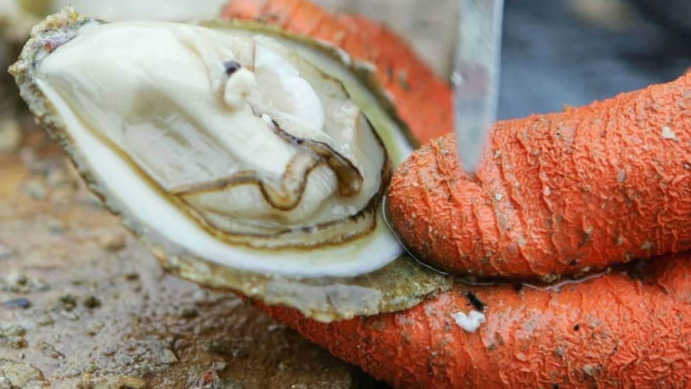 Scientist silenced over oyster parasite re-discovery