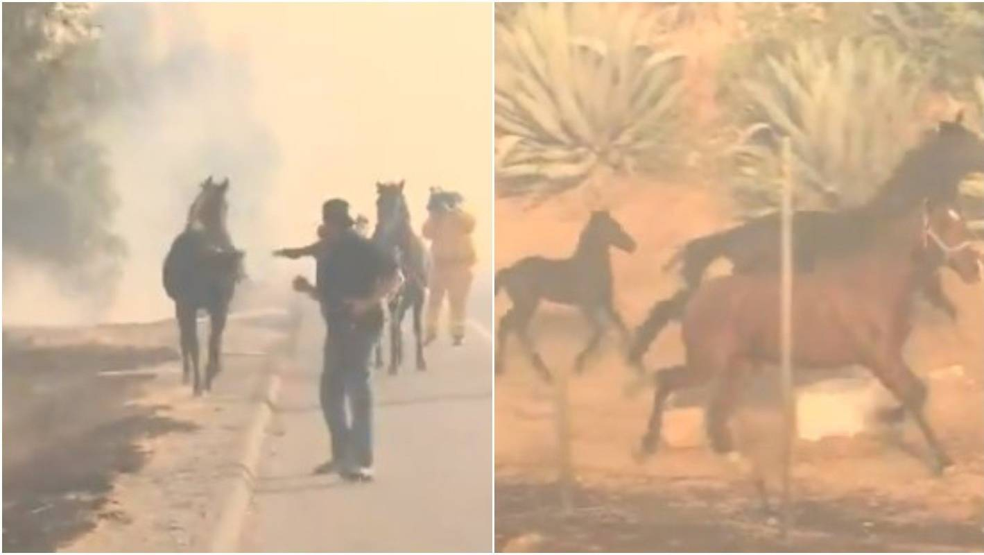 Image result for Heroic horse runs back towards California wildfire to find his family