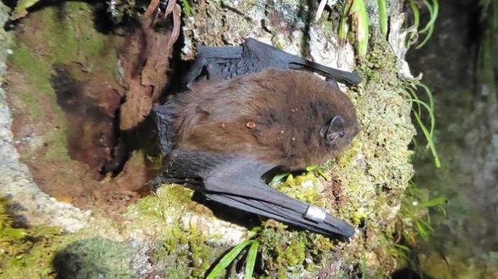 Call To Save Endangered Bats As City S Sprawl Threatens
