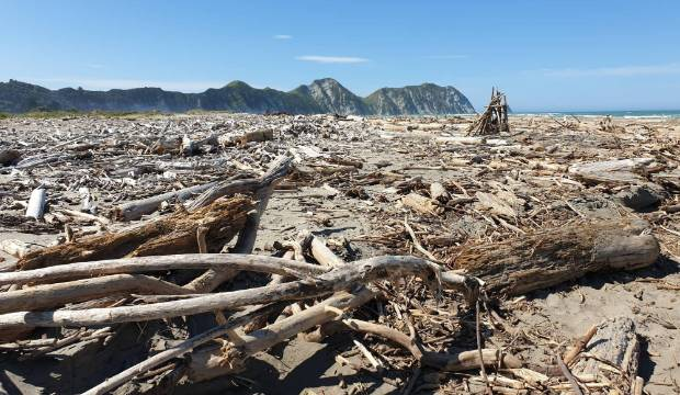 Tolaga Bay: A beach covered in forestry waste