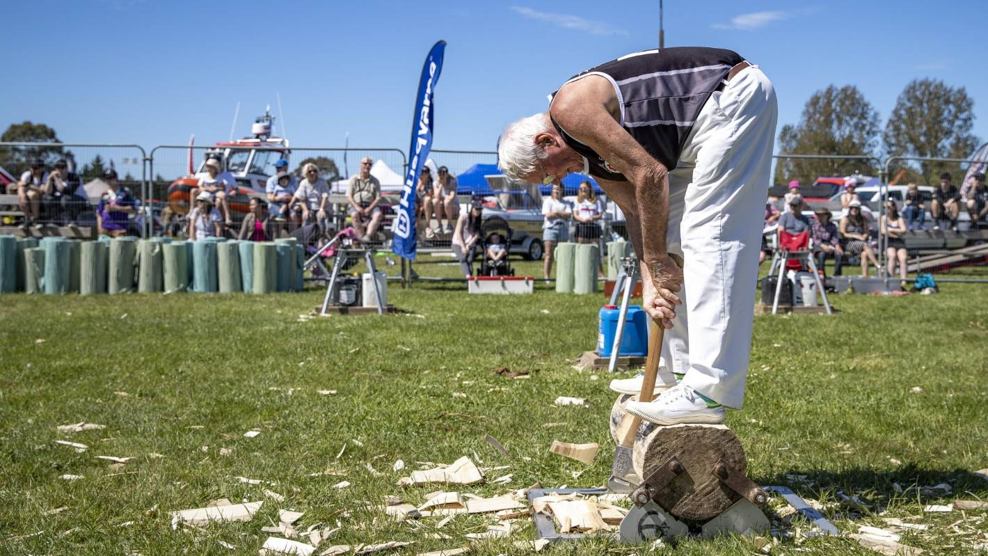 Veteran axeman cutting the path for young woodchoppers