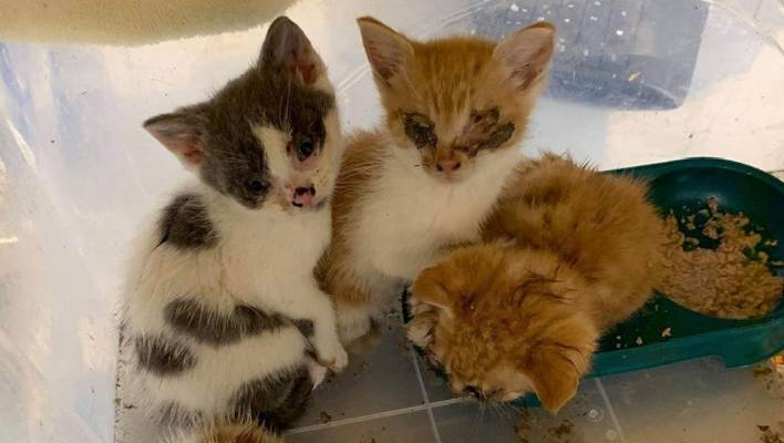 Sick kittens rescued after being 'left to die' in Auckland