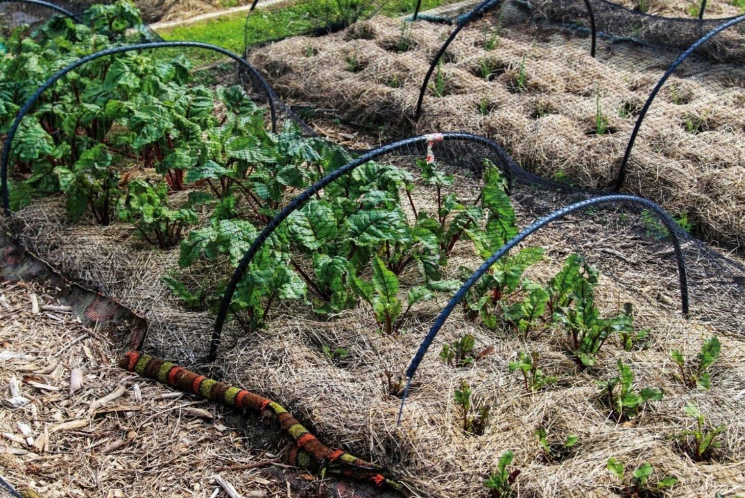 How To Mulch Your Garden Stuff Co Nz