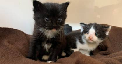 Three-week-old kittens Mitsi and Lancer were snatched from the jaws of death after they were discovered in a Wellignton ...