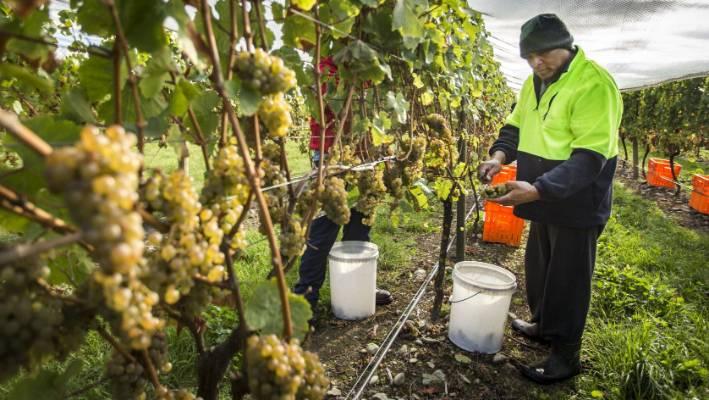 Wine is New Zealand's sixth biggest export.