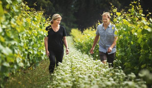 Organic and natural wine market grows on the back of conscientious consumers