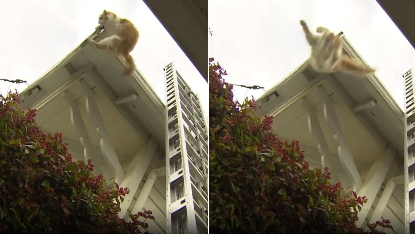 Cat ignores firefighters' help, takes leap of faith into garden