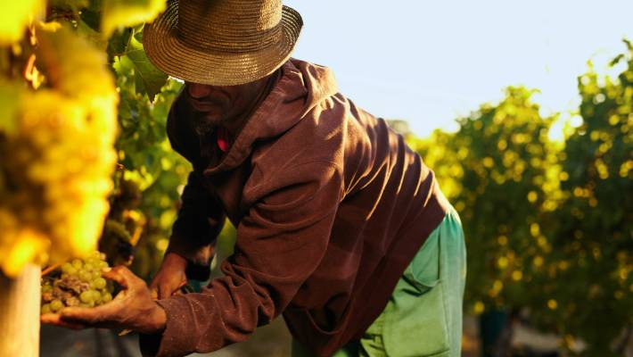 Recognised Seasonal Employer workers have help make wine New Zealand's sixth largest export.