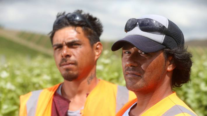 Lolagi Tala and Pine Eli are two of the 12 Samoan RSE workers in Marlborough.