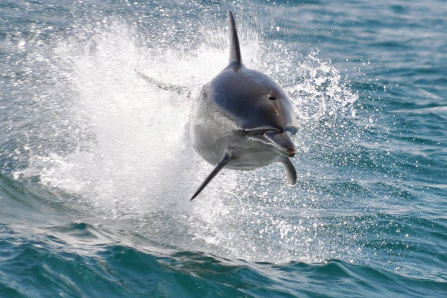 Baby Dolphin Entangled With Fishing Gear Found Dead With Deep Cuts To Body Stuff Co Nz