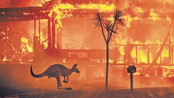 A photo from the front page of The Times last week, featuring a kangaroo in front of a burning house. More than a billion animals are feared to have been killed in the recent bushfires.