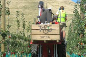 """Hawke's Bay is know as """"the fruit bowl"""" of New Zealand and is the region which produces most apples."""