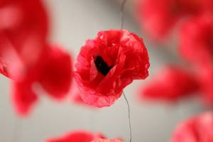 Tall poppy syndrome refers to when people are resented, attacked, cut down, strung up or criticised because they are ...