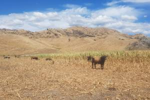Marlborough farms are battling some of the driest conditions on record.