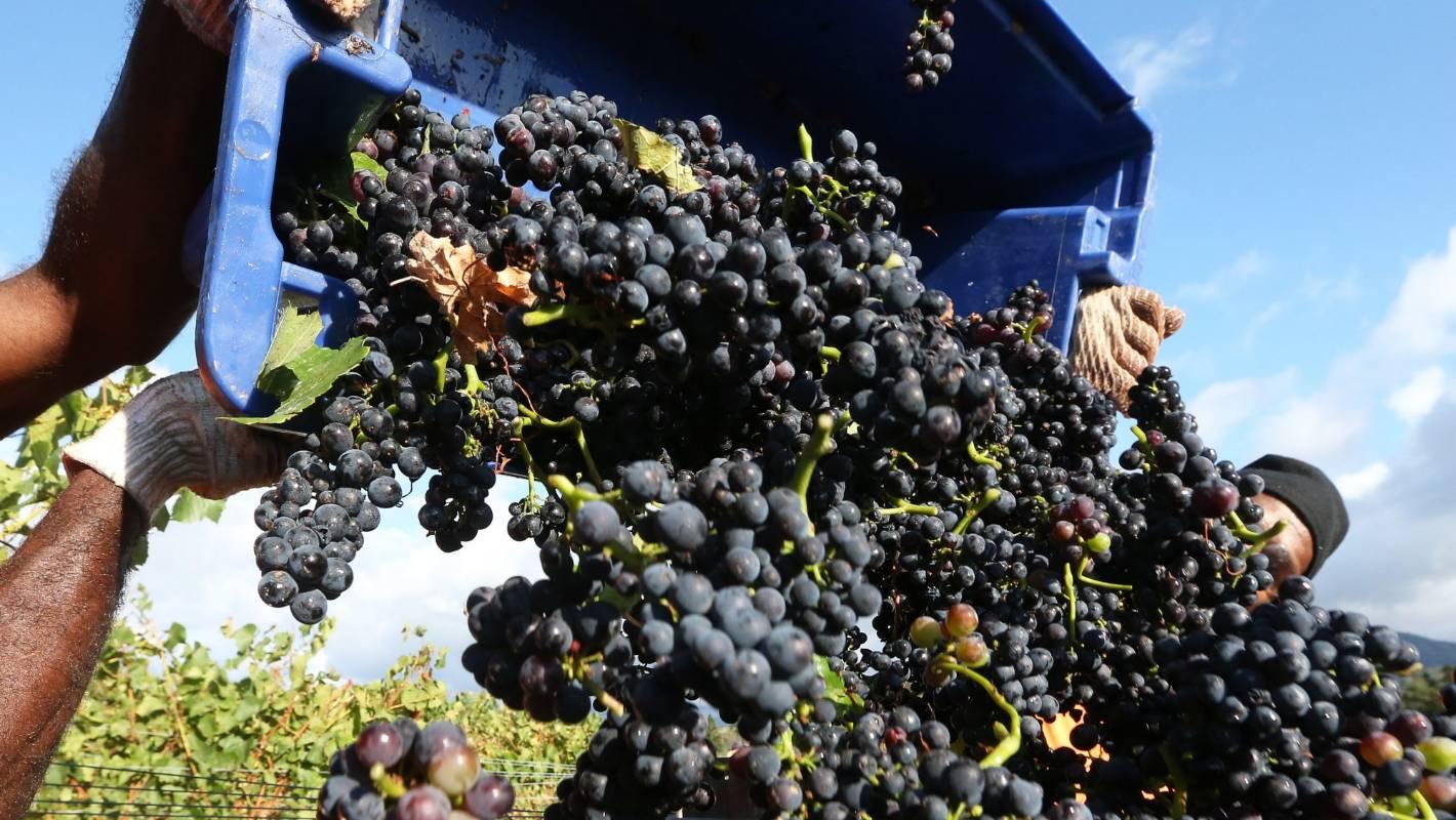 Coronavirus: New documents show strict wine industry protocols during lockdown
