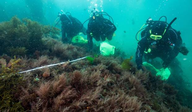 Asparagopsis seaweed firm defends its use as 'game changer' for Kiwi agriculture