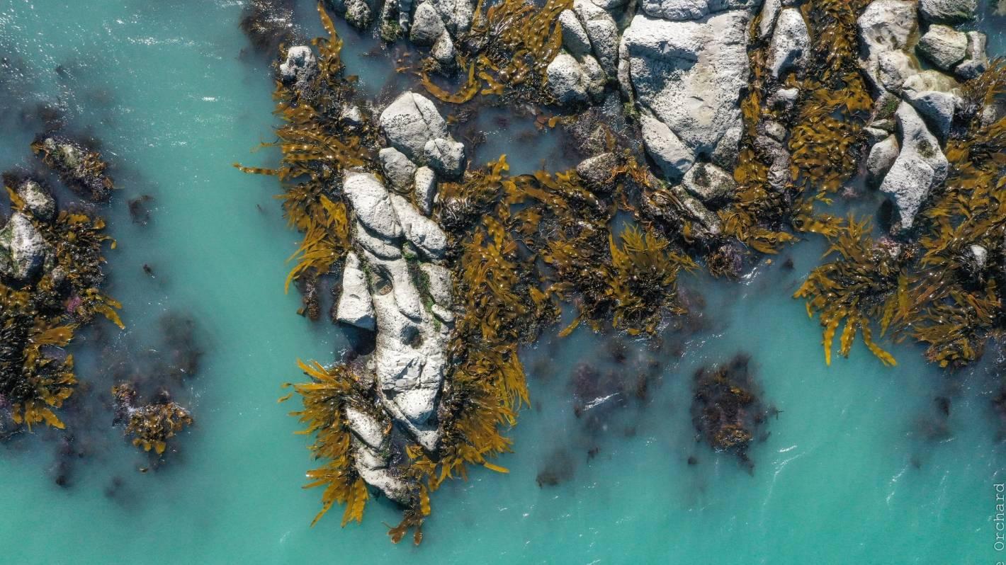 Drone shots show marine recovery along quake-stricken Kaikoura coast