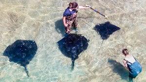 NZ's amazing stingray encounter