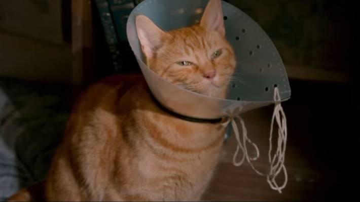 Famous Feline Of A Street Cat Named Bob Dies At 14 Ish Stuff Co Nz