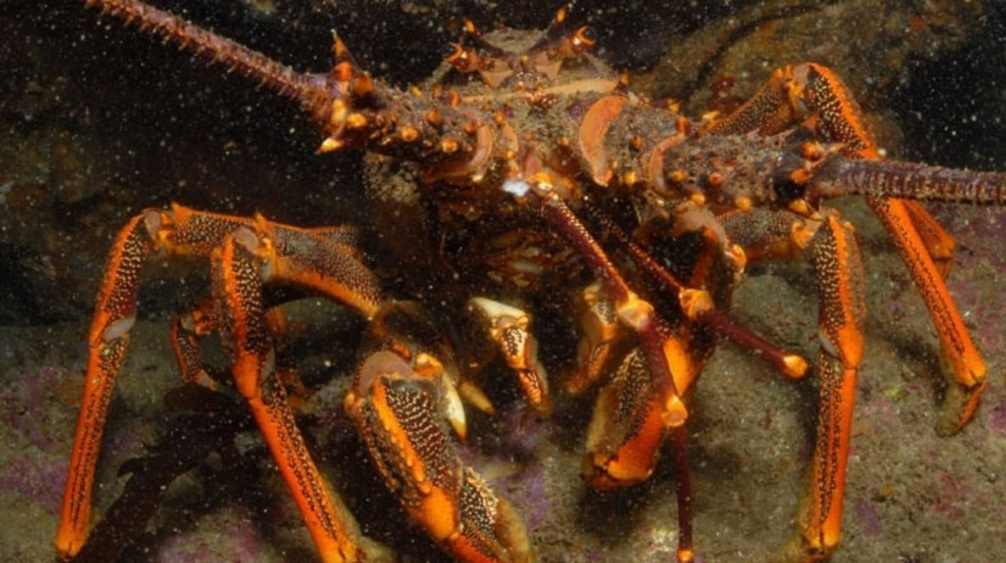 Crayfish exports hit five-year high after coronavirus lockdown