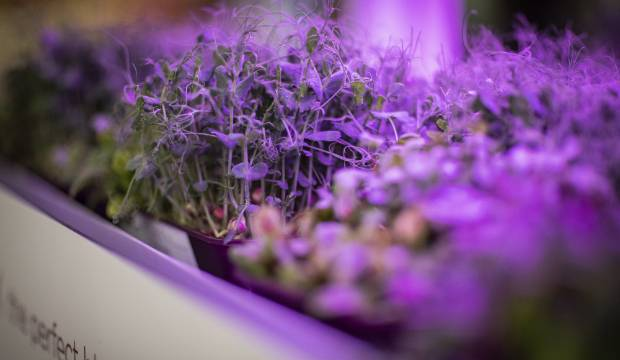 Microgreens start-up launches first-of-its-kind supermarket growing system