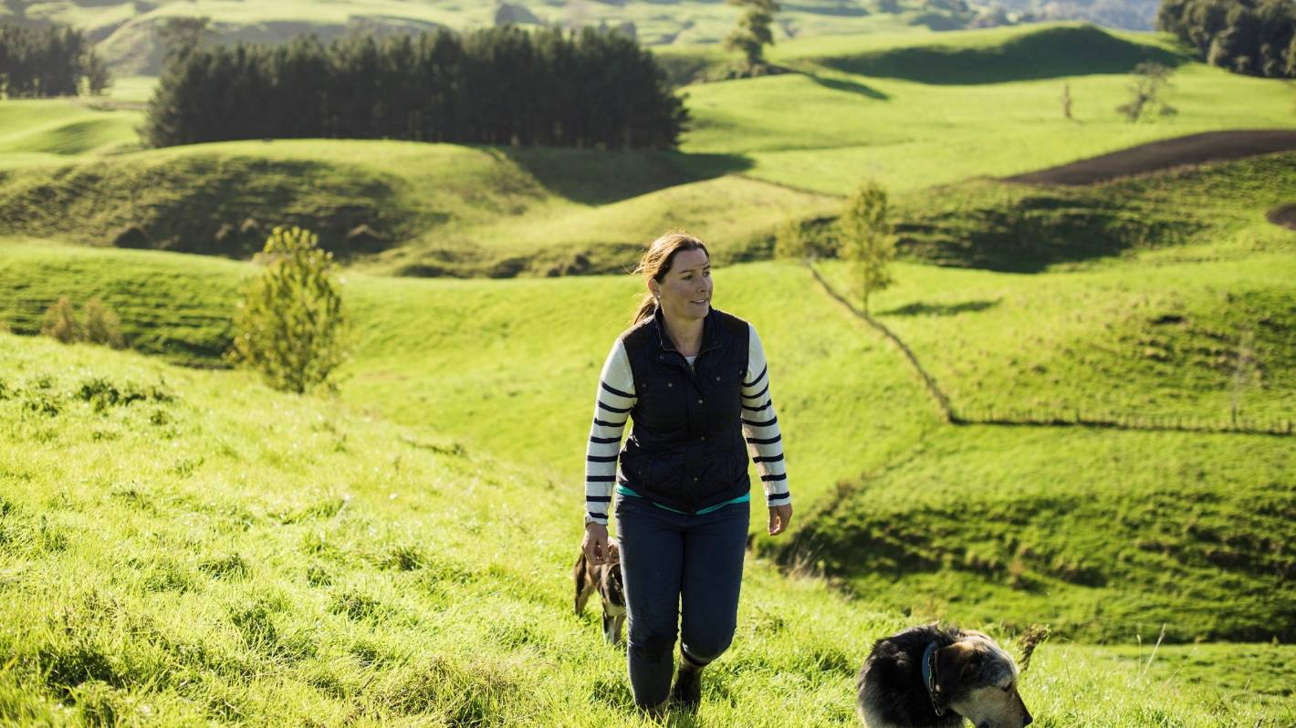 Farmer's pitch to big biz: My land, your trees, planet's gain