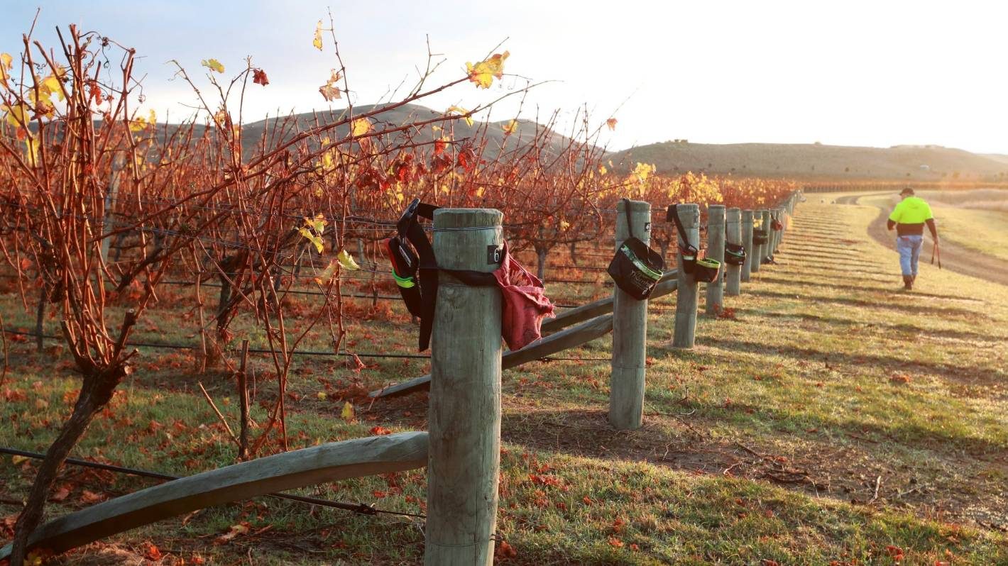 stuff.co.nz - Marlborough wine industry gets funding to train 200 Kiwi job-seekers