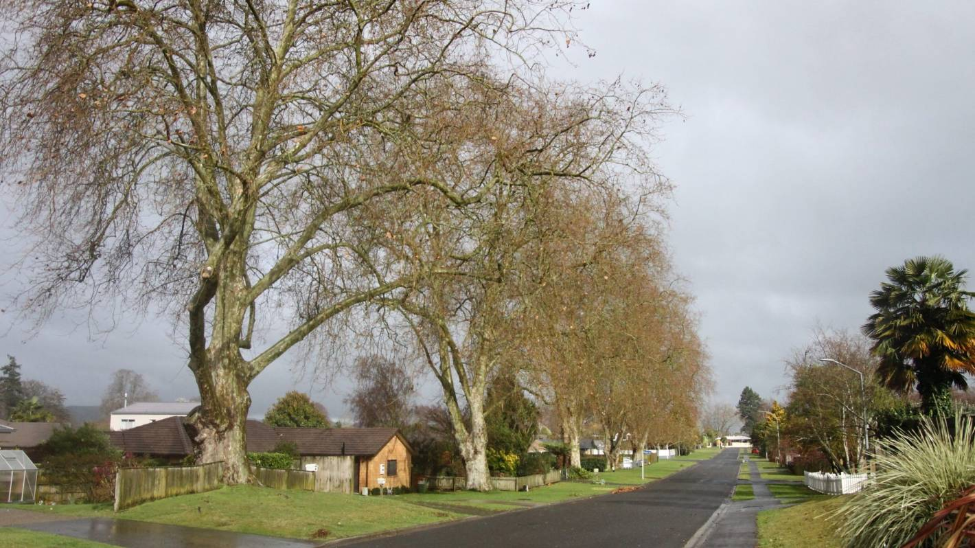Waipā District Council seeks advice over liability of protected trees