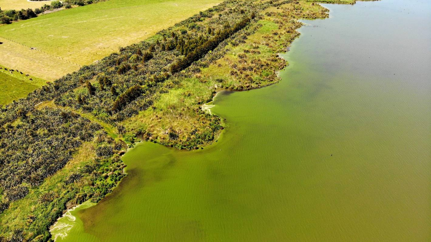 Lake Horowhenua may be exempt from new freshwater standards