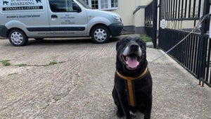 Dog abandoned because he hadn't 'learnt to be good'