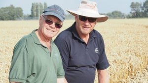 Kiwi farmer breaks own world record with monster wheat crop