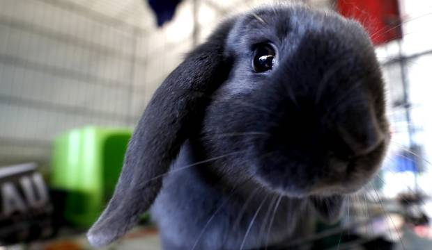 Acrimonious spat between neighbours includes allegation of giving laxatives to rabbits