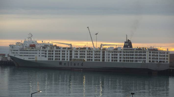 The Ocean Drover, the world's largest livestock carrier, arrived in port at PrimePort Timaru on Saturday.