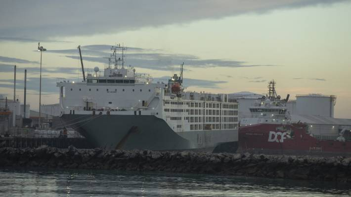 The Ocean Drover is in Timaru to collect up to 14,000 cattle bound for China.