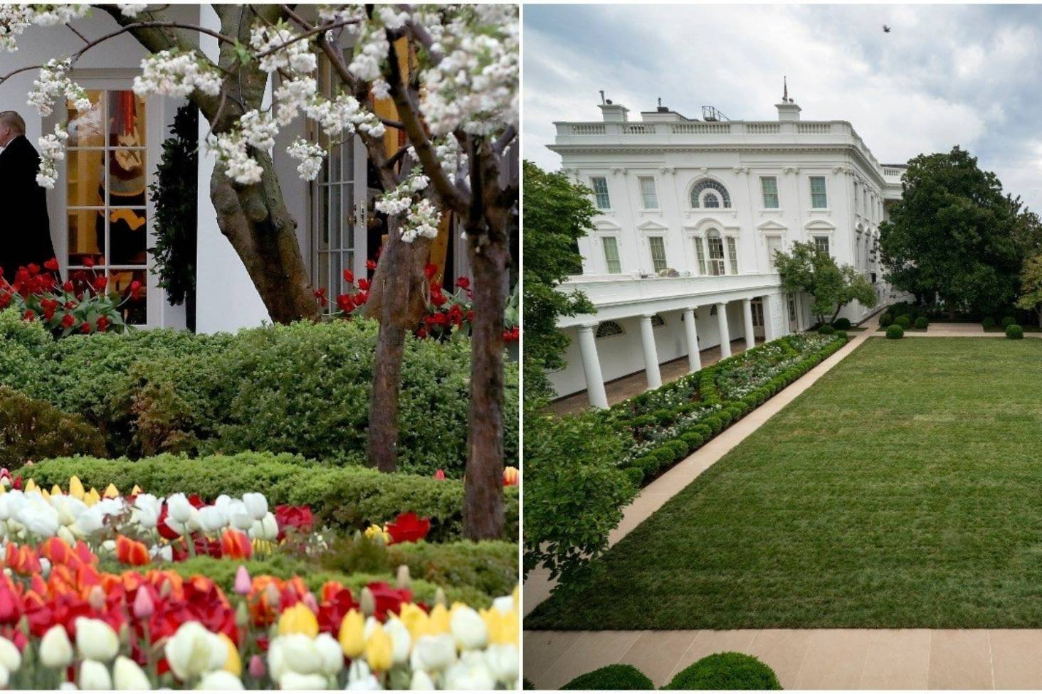 Melania Trump S Revamp Of The White House Rose Garden Is Debuted And Twitter Has Some Thoughts Stuff Co Nz