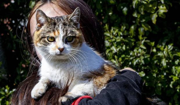 Elderly missing cat returns home after seven years in the wilderness