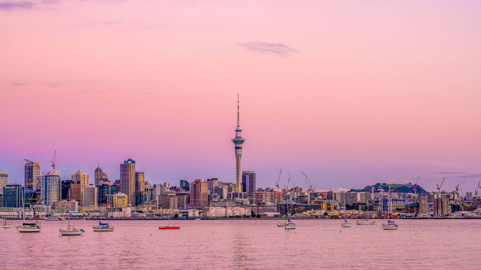 Aroha for Auckland: Sharing the love for our biggest city