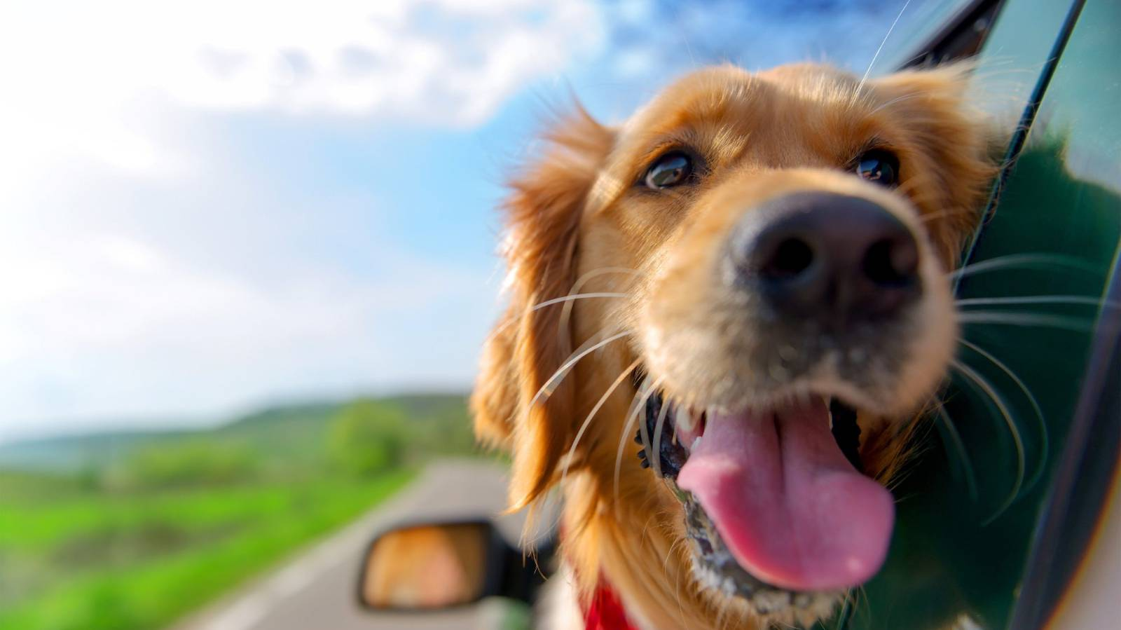 Have pup, will travel: How to take your dog on holiday with you