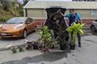 Ten of the 12 stolen plants have been returned to Wellington Botanic Gardens.