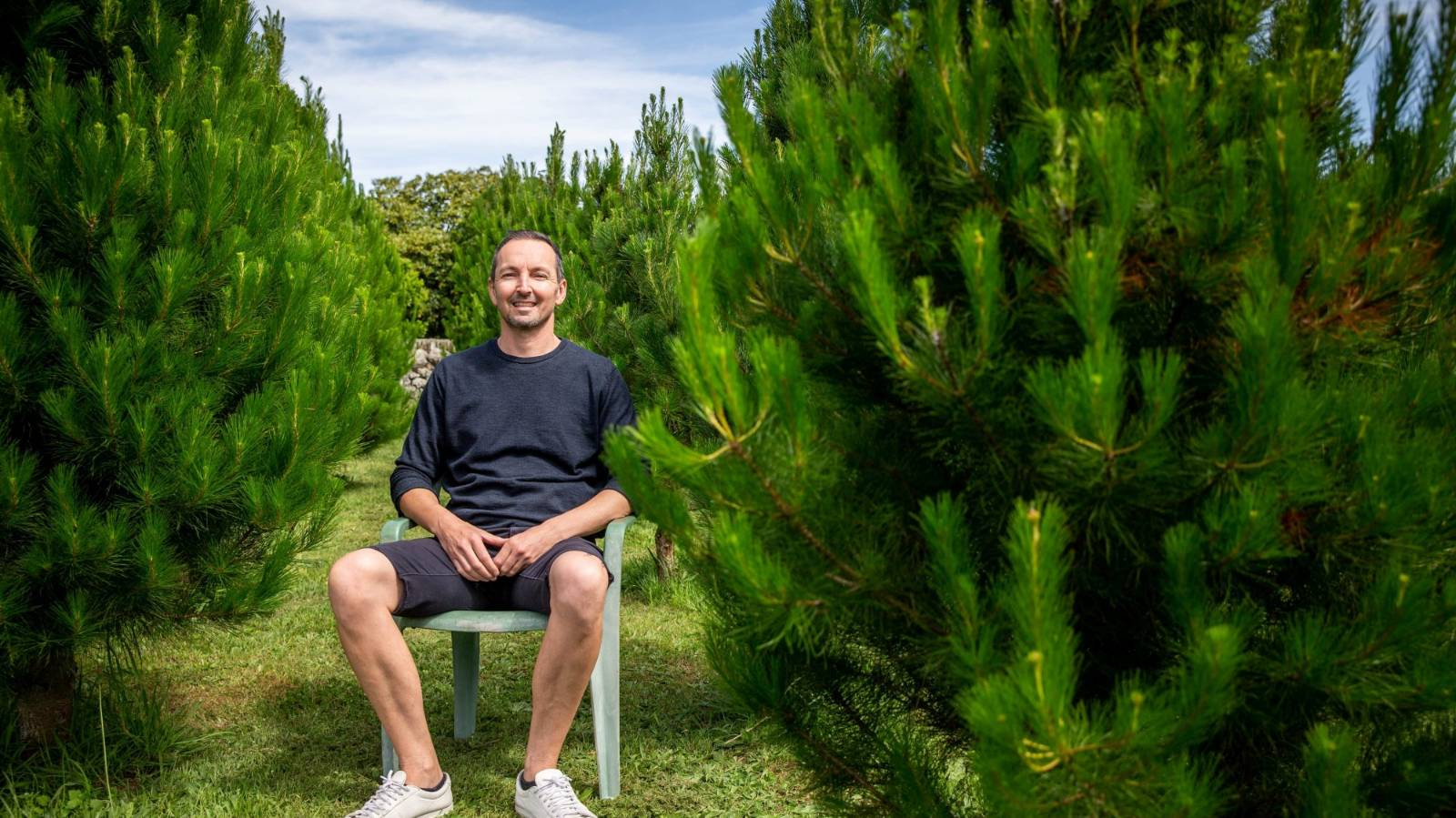 The science of choosing a real Christmas tree