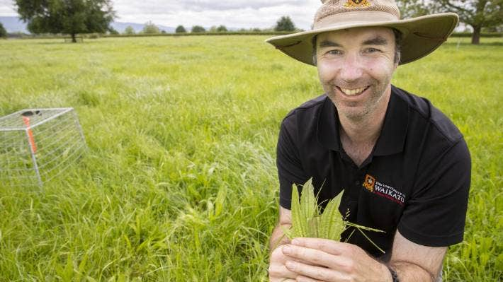 University of Waikato research officer Aaron Wall holding some of the plantain leaves growing in the trial paddock.