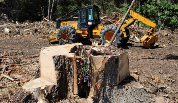 Tree deemed 'low priority' before fall that killed Otago woman