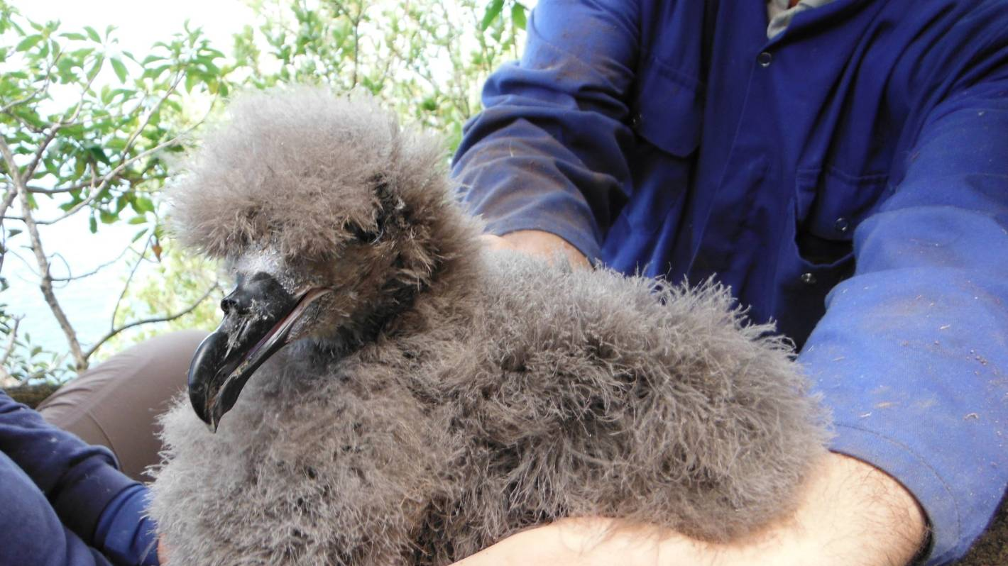 These elusive Auckland species are found nowhere else on earth